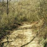 sentiero-saretto-1